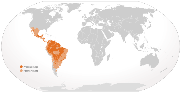 The historic vs current range of the jaguar. Range of jaguar (Panthera onca) by The Emirr. CC BY 3.0