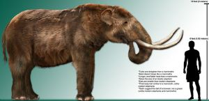 Early humans likely contributed to the extinction of animals like the American mastodon (Mammut americanum). Mastodon rendering by Dantheman9758. CC BY 3.0