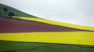 Cleverly landscaped fields in the UK that resemble the Guyanese flag. Guyana, Berwickshire by Richard Webb. CC BY-SA 2.0