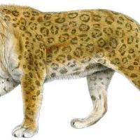 The Historic Journey of the Jaguar