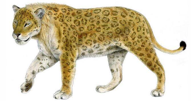 Taipan's rendition of Panthera onca augusta, a prehistoric North American jaguar.  Public domain.