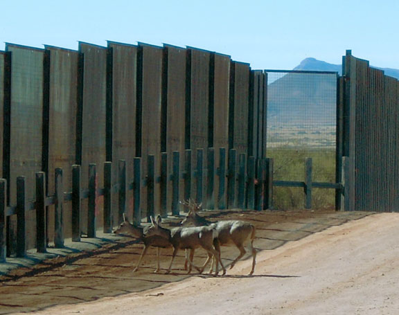 Existing border walls are already disrupting the lives of Southwestern animals. There is no need to make it worse. Image (c) Northern Jaguar Project and reproduced from www.northernjaguarproject.org.