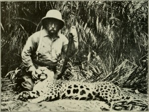 "While Theodore Roosevelt killed this jaguar in South America, many Americans hunted them in the southwestern United States. This was the driving force behind their decline. ""The American Museum journal (c1900-(1918)) (17972328810)"" by Internet Archive Book Images. No restrictions."