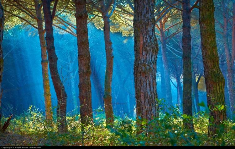 Forest by Moyan Brenn. CC BY 2.0