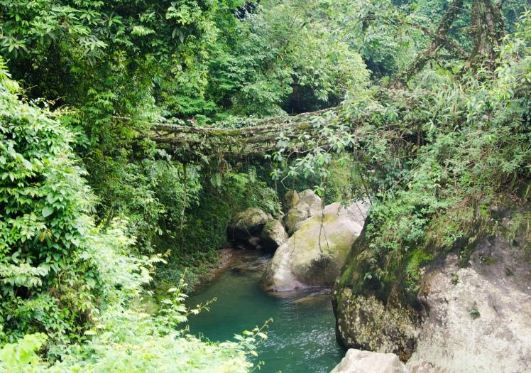 Cherrapunjee Rain Forests by Ashwin Kumar. CC BY-SA 2.0