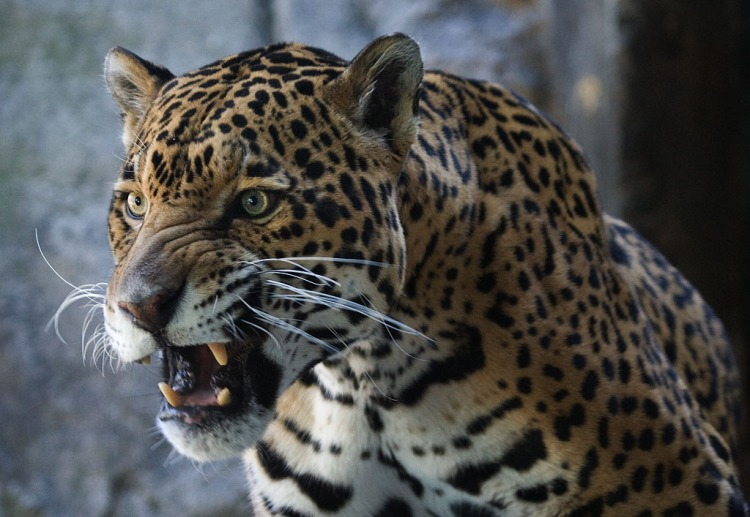 Snarl by Tim Bouwer. CC BY-NC-ND 2.0