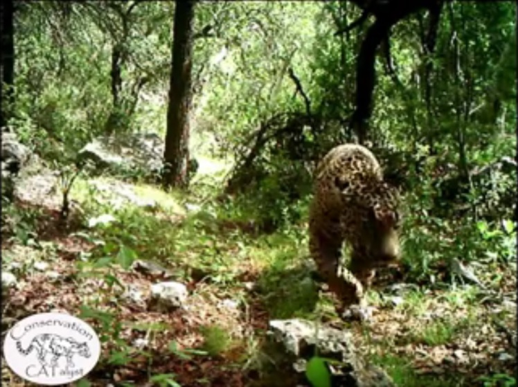 A screenshot of El Jefe from the Center for Biological Diversity and Project CATalyst's new video.