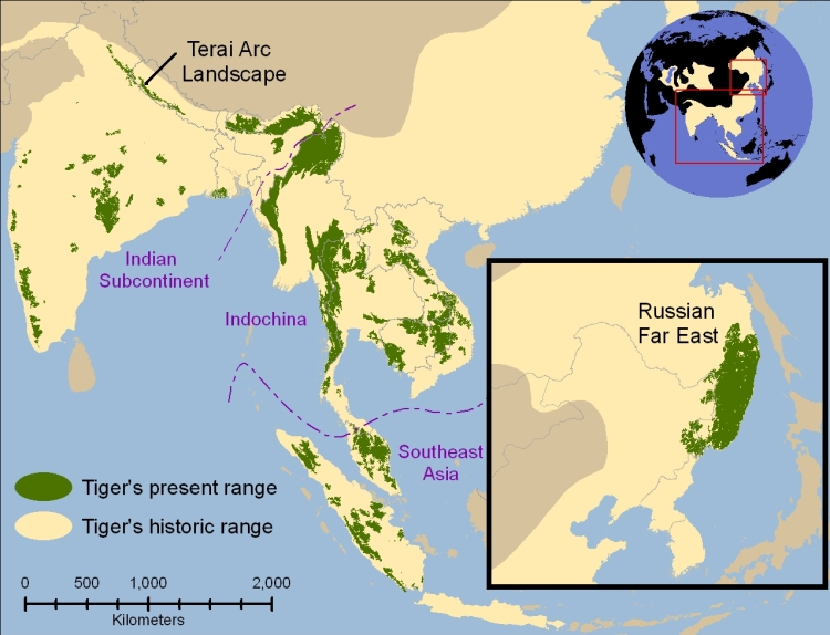 A map highlighting current and historical tiger ranges. Tiger map by Sanderson et al. CC BY 2.5