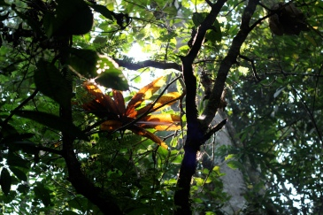 A shot from inside the Manu Biosphere Reserve. 1 by Canopy to Cures. CC BY-NC-ND 2.0