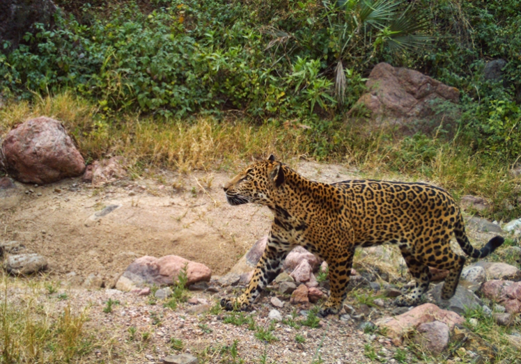 A good example of the specificity principle comes from Marchini and Macdonald (2012). Instead of measuring ranchers' general attitudes towards jaguars, they assessed their attitudes towards killing jaguars. Osman at Dubaral, November 2014. Image (c) Northern Jaguar Project and reproduced from www.northernjaguarproject.org