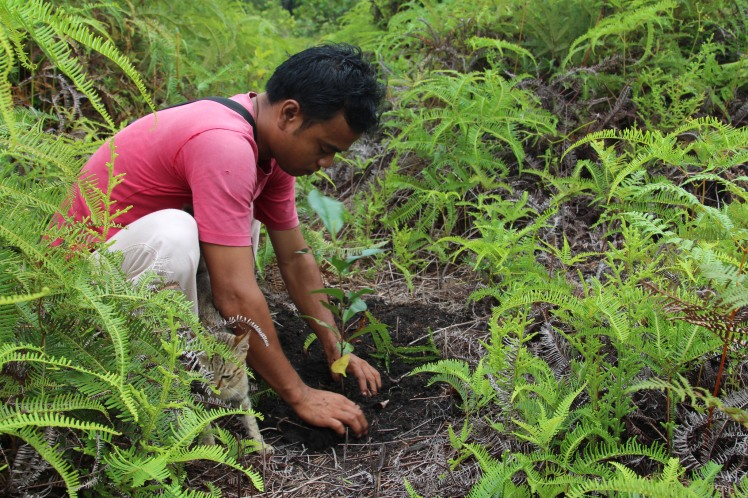 Might engaging in pro-conservation behavior lead people to adopt pro-conservation attitudes? According to self-perception theory (Bem, 1967), yes: as long as their actions cannot easily be attributed to external forces. Pesalat Reforestation Project, Central Kalimantan, Indonesia by World Resources Institute. CC BY-NC-SA 2.0