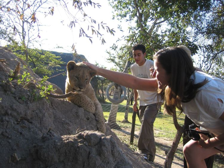 Petting a lion cub might seem like a great experience, but it can actually contribute to the horrible canned hunting industry. Petting a Lion Cub by Graham. CC BY-NC-SA 2.0