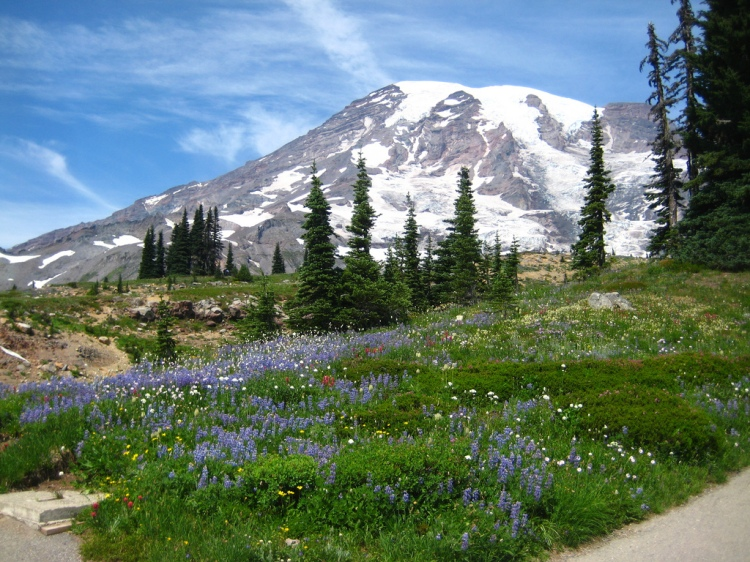 "Mount Rainier is one of the ""wild places"" that has left a mark on me. Very Rare by Maggie Tacheny. CC BY-NC 2.0"