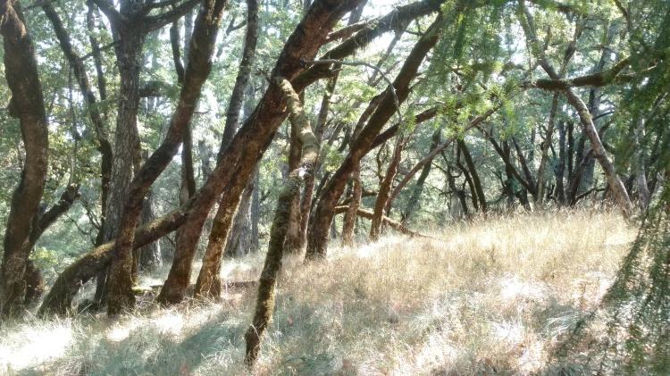 A stand up beautiful oak trees on Kyle Keegan's Fool's Farm.