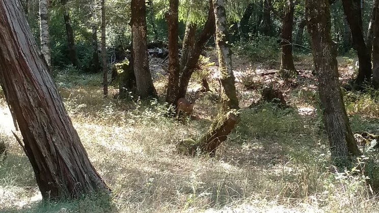 On the way back from Kyle's garden, we spotted some deer! I apologize for the poor image, but it is the best I could do.