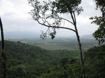 Rainforest in Guyana. CC BY-SA 3.0