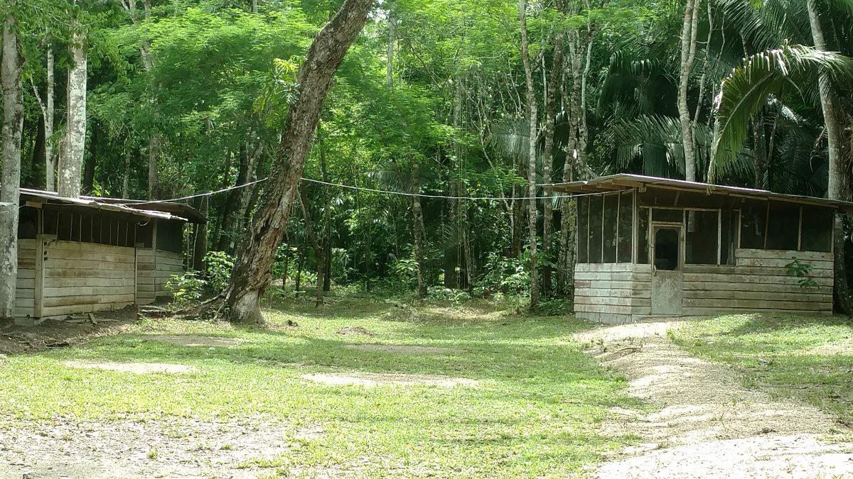 A cabin in the jungle.