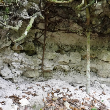 The inside of one of the many looter's trenches at La Milpa.