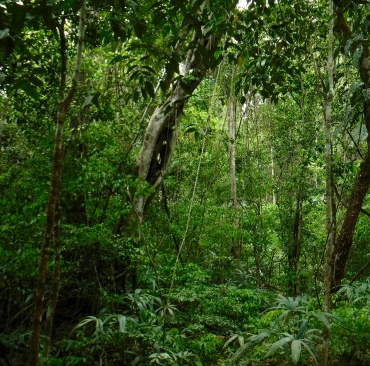 The sub-tropical rainforest of the Rio Bravo Conservation and Management Area was intensely beautiful.