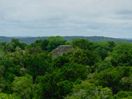One of Tikal's many temples, seen from on top of Temple IV. Unfortunately, I do not know which temple this is.