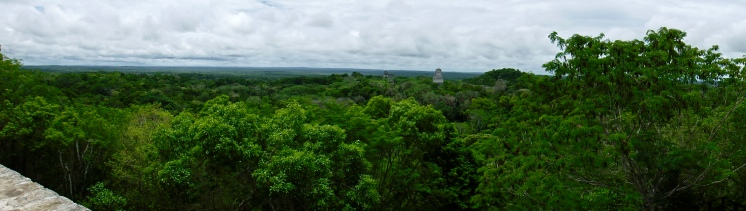 A somewhat blurry panorama taken from atop Temple IV. My little point-and-shoot camera struggled to cope with the tropical humidity throughout this trip. My cell phone camera fared even worse.