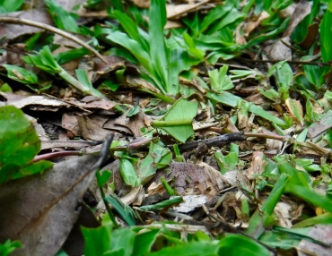 While us tourists were enjoying ourselves, this leaf-cutter ant was hard at work.
