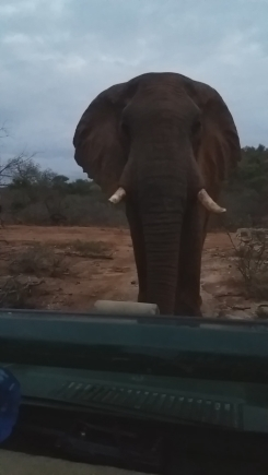 By allowing this elephant to walk towards him, instead of driving right up to it, Sam had an awesome encounter. Image © Sam Hankss.