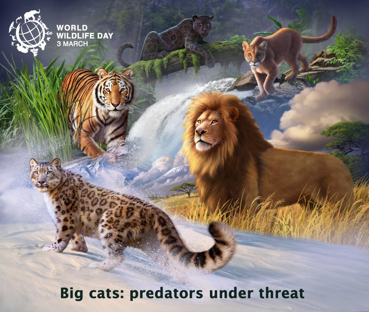 Save Big Cats Life