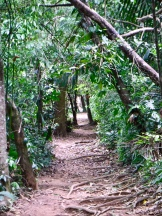 Looking down a trail at Guanacaste National Park.