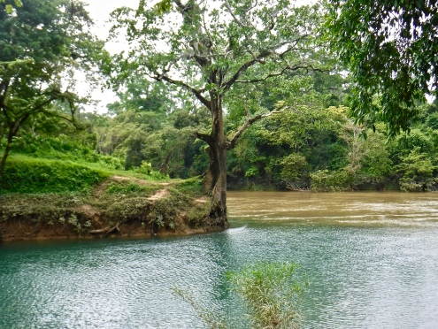 A tree at the edge of where the swimming hole at Guanacaste National Park meets the Belize River.