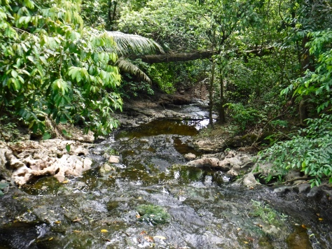A beautiful stream in Guanacaste National Park.