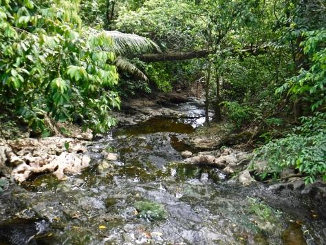 A beautiful stream in Guanacaste National Park.