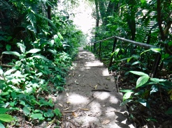The stairway to the Belize River in Guanacaste National Park.