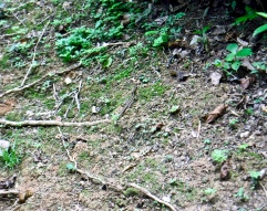 A well-camoflauged lizard. These little guys were lightening-fast, and almost impossible to get a picture of!