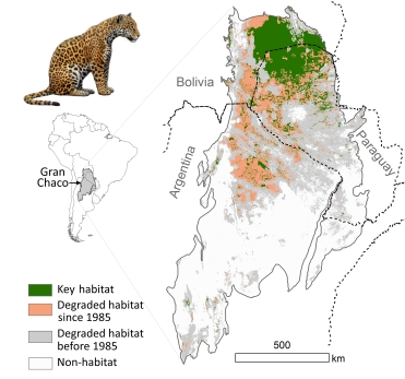 A map of jaguar habitat degradation before and after 1985. Image © Alfredo Romero-Muñoz, used with permission.