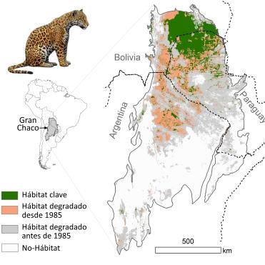 Un mapa de la degradación del hábitat del jaguar en el Chaco antes y después de 1985. Imagen © Alfredo Romero-Muñoz, utilizado con permiso.