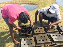 Setting up a series of crab-culture boxes. Image © Fishing Cat Conservancy.