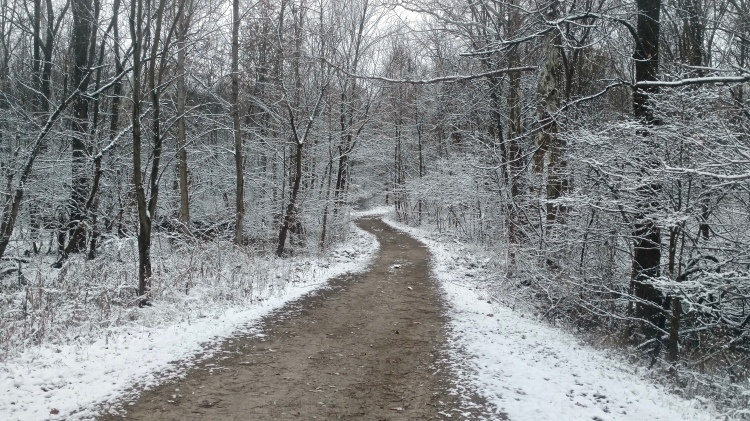 A path through a snow-covered woodland.
