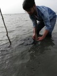 FCC lead field researcher Pranav Tamarapalli placing a crab-culture box in the water. Image © Fishing Cat Conservancy.