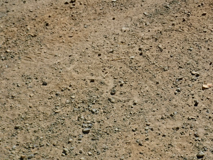 A snake track in a dirt road.