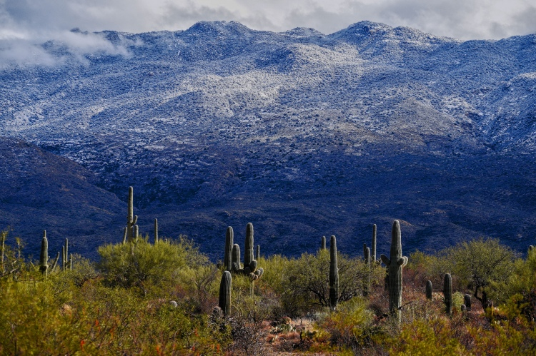 A snowy mountain range in the distance with cacti in the foreground.