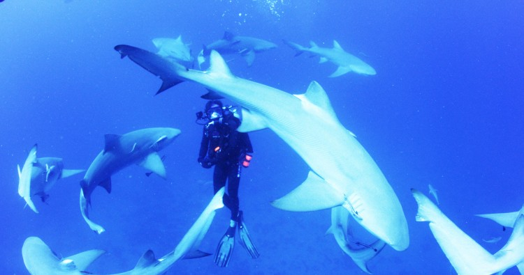 A diver surrounded by sharks.