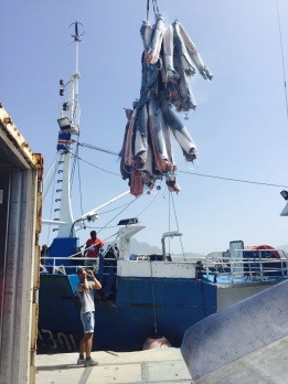 Fishing vessel unloads a haul of shark carcass' into a refrigerated shipping container in Cabo Verde during Sharkwater: Extinction.