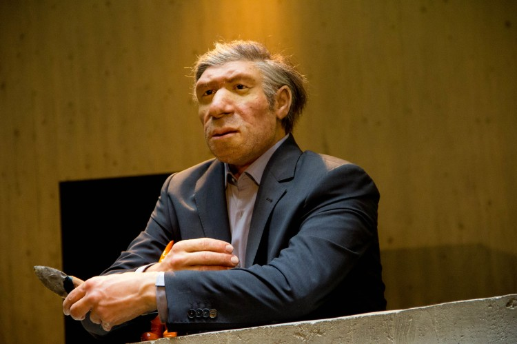 A wax figure of a Neanderthal in modern clothing.