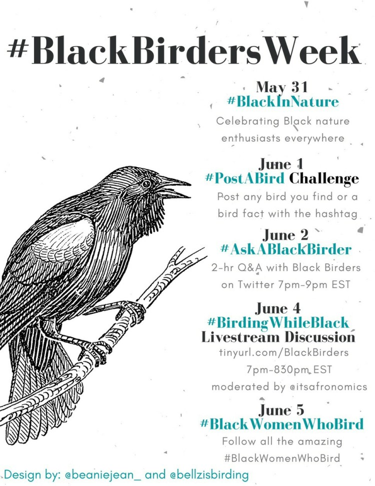 A schedule for Black Birders Week.
